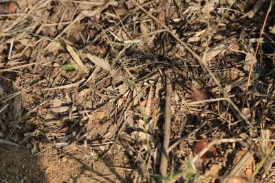 Hundred of ants