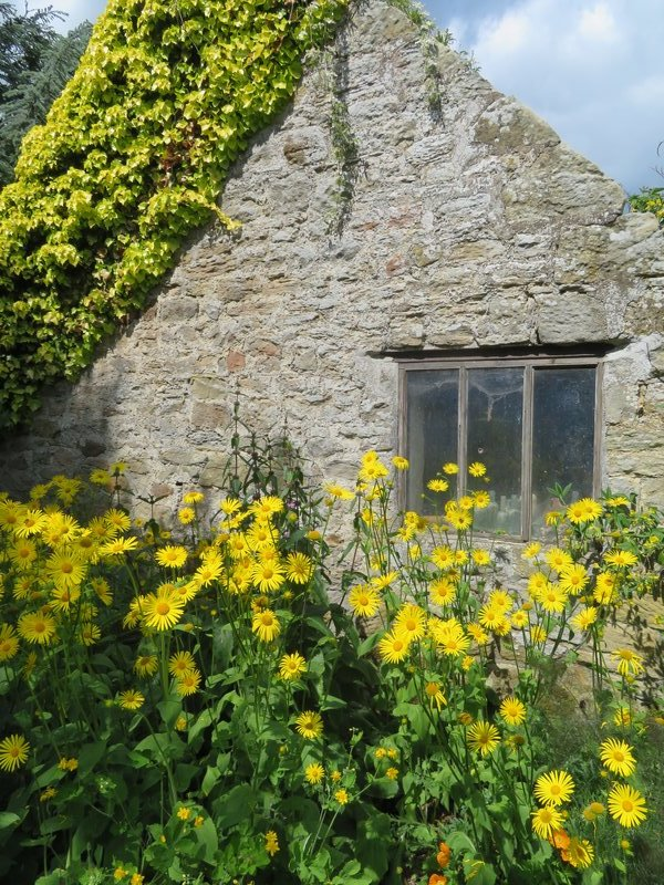 IMG_1108 daisies against the stone wall of the house