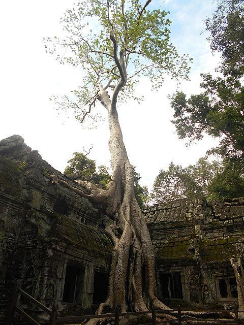 Ta Prahm