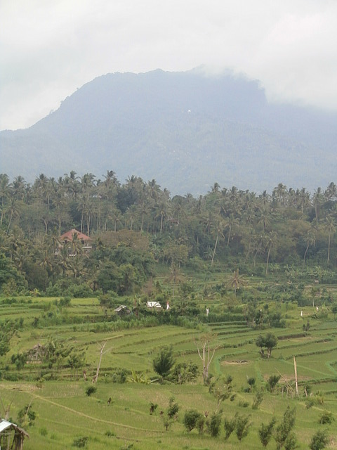 North Bali rice fields