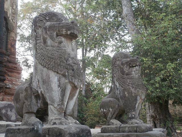 Rolous lions
