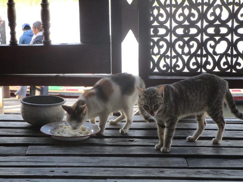 At the Jumping Cat Monestary