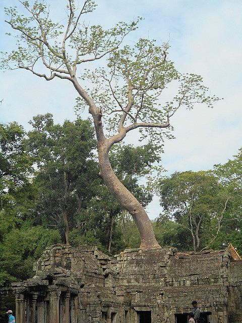 More Ta Prahm