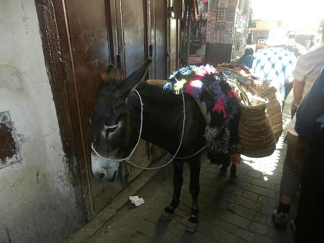 Fez donkey