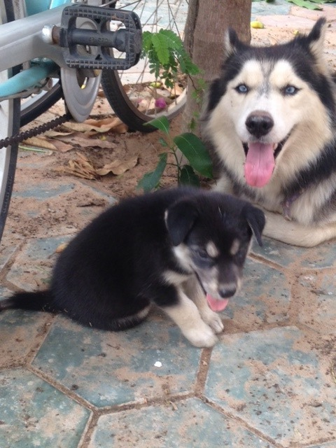 Lucky and puppy