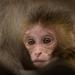 Young resident of  Swayambhunath (Monkey) Temple