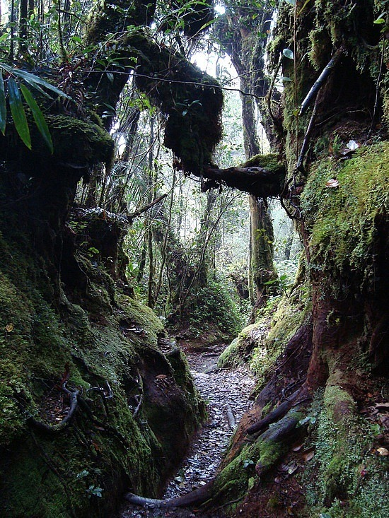 CH - Gunung Brinchang trail