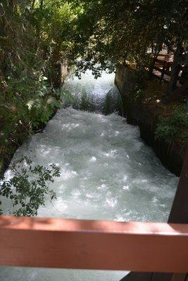 The_River_Dan.jpg
