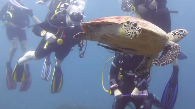 The sea turtle was the definite highlight of our last dive.