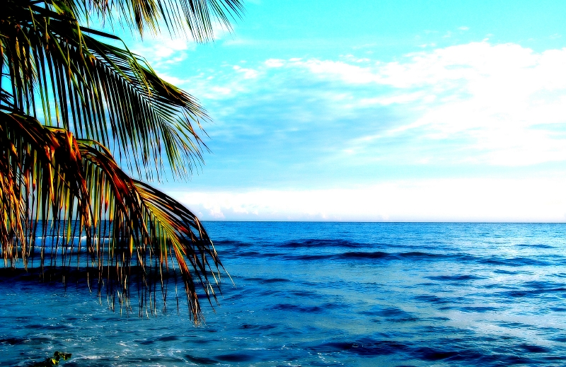 Coconut Limbs by the Sea