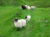 Isle of Skye, Fairy Glen , Uig