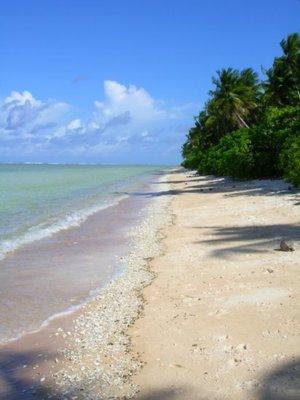 Beach on Nanumea 11