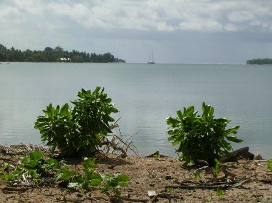 Beach on Nanumea 06