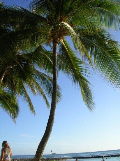 Waikiki Beach 02