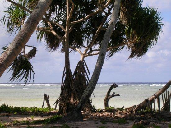 Beach on Nanumea 07