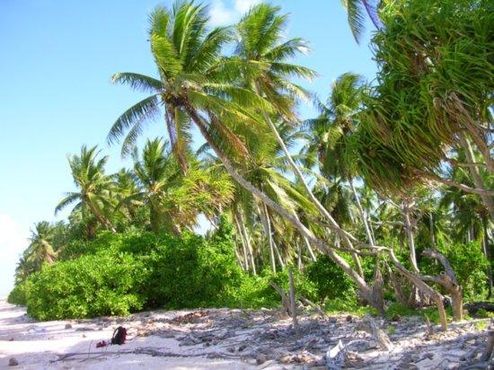 Beach on Nanumea 14