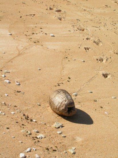 Beach on Nanumea 13