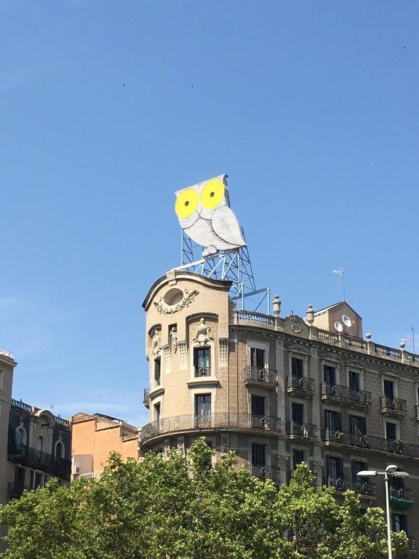Owl Barcelona