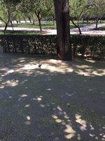Red Squirrel and bird in Parque De El Retiro, Madrid