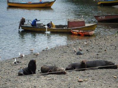 Im Fischerhafen von Puerto Montt