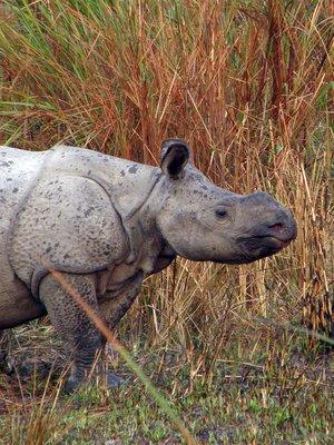 Baby_rhino.jpg