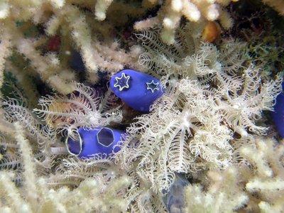 Cool_corals.jpg