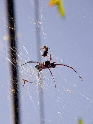 Evil_tree_spider.jpg