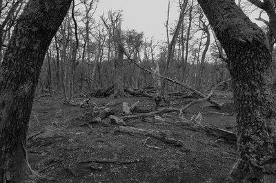 Forest_b_w_2.jpg