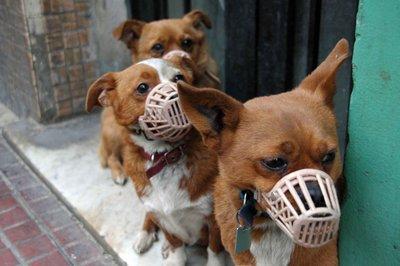 Killer_dogs.jpg