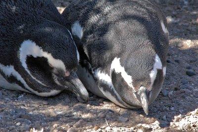 Penguin_couple.jpg