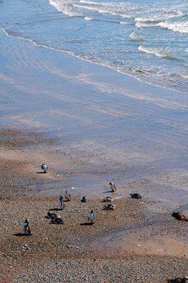 Penguins_on_the_beach.jpg