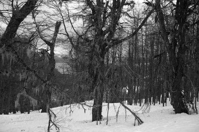 Trees_B_W.jpg