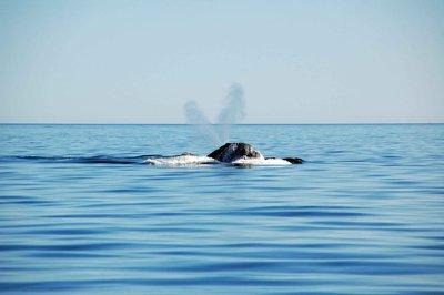 Whale_breath.jpg