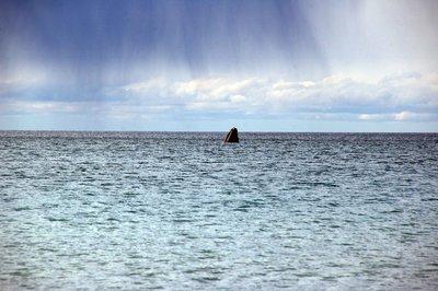 Whale_head..e_beach.jpg