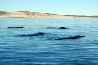 Whale_quartet.jpg
