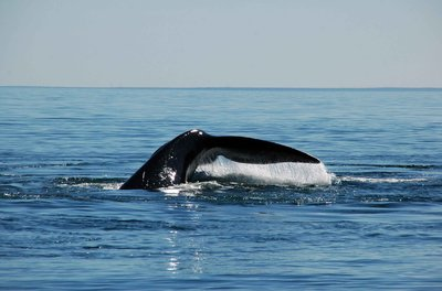 Whale_tail_water.jpg