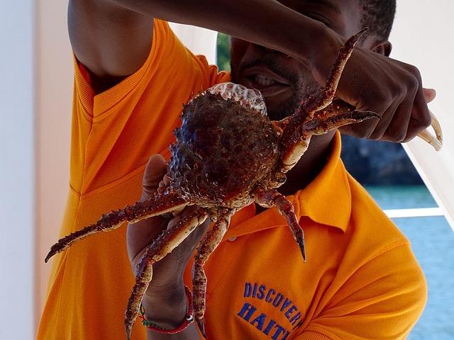 Spider Crab?