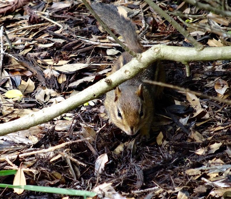 Cute Squarrel
