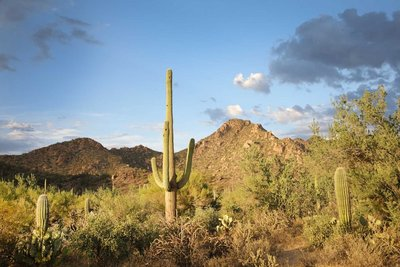 Saguaro Mountains 3637