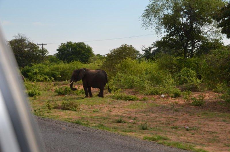 image073 elefants