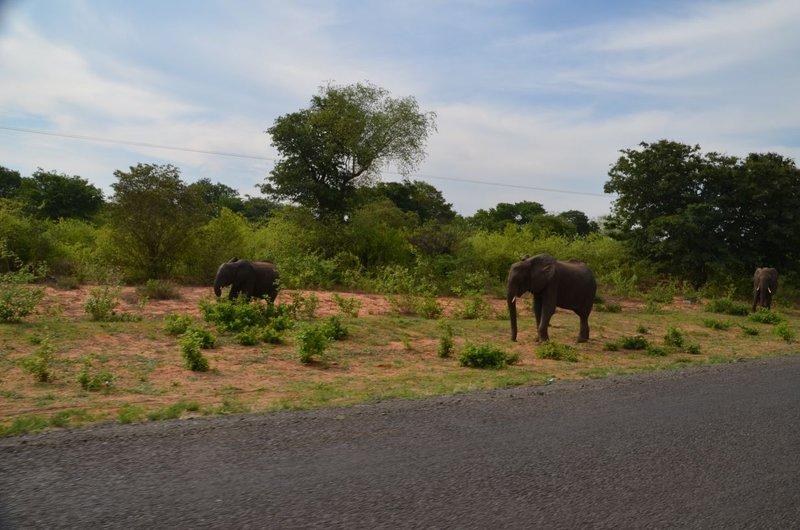 image074 elefants