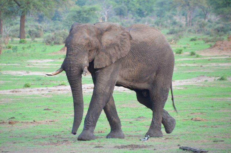 image075 elefants