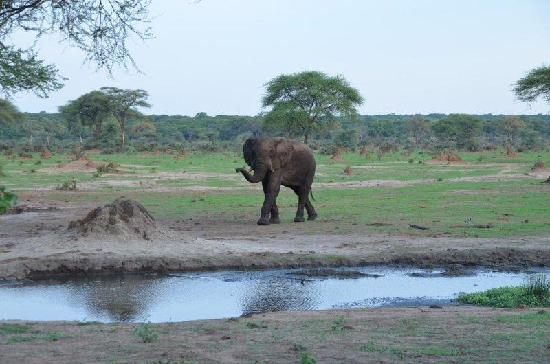 image076 elefants