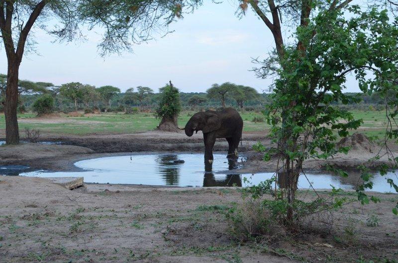 image077 elefants