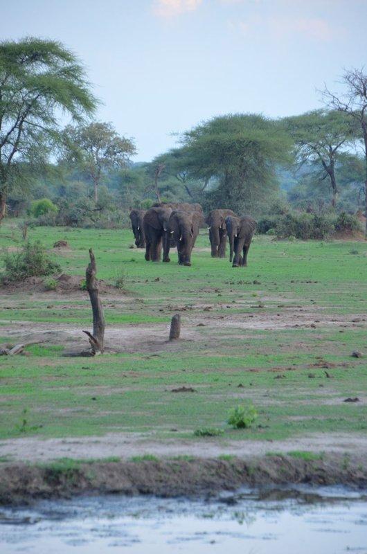 image078 elefants