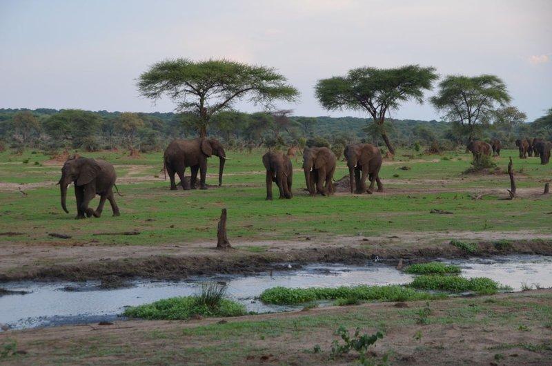 image079 elefants