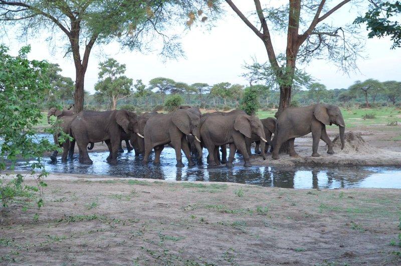 image080 elefants