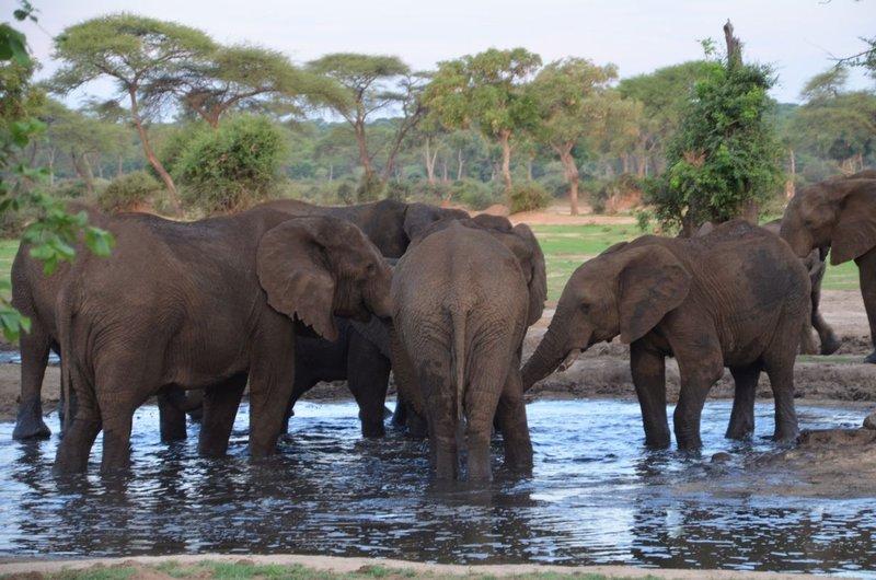 image081 elefants