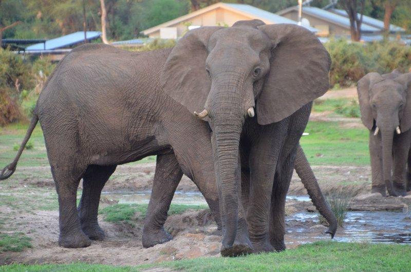image082 elefants