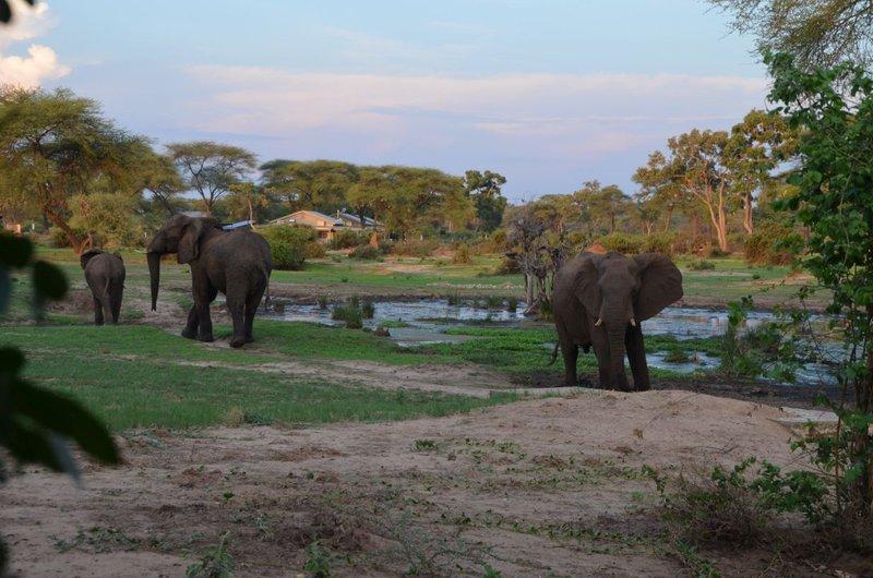 image084 elefants
